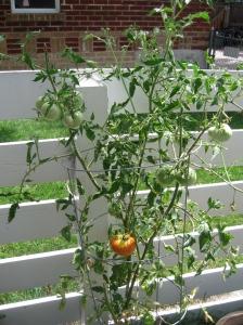 Fulcrum gardening blog